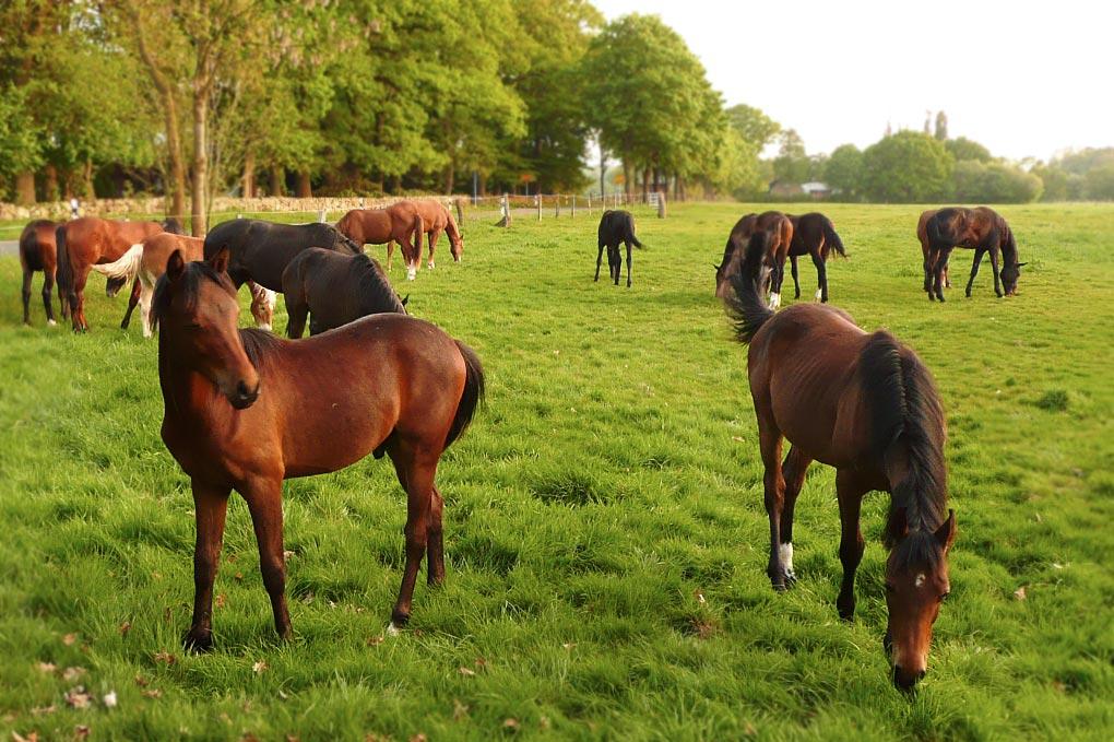 garlstorf-pferde
